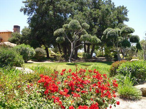 Vibrant Landscaping